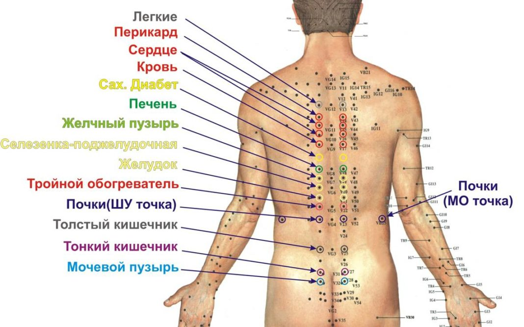 биологически активные точки на теле человека фото с описанием вариантов конструкции дома